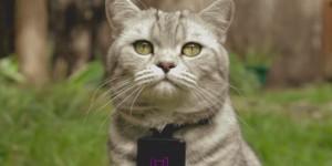Nu kan katterna äntligen sköta sina egna Instagramkonton med Catstacam